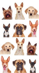 Photo collage of different breeds of dogs