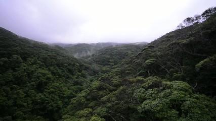 やんばるの森林