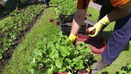 Garden Workers Planting Seedlings