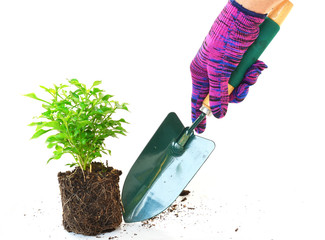 Gardeners hand in work glove with spade