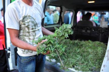 Hombre repartiendo romero para el Corpus Christi, Andalucía