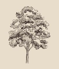 tree vintage illustration, engraved retro style