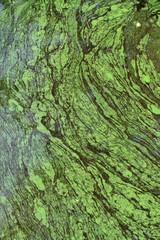 Green algae abstract