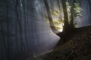 sun rays in a dark mysterious forest
