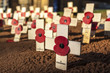 Remembrance Day Crosses - 65720195