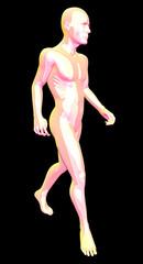Corpo anatomia uomo con muscoli in 3d