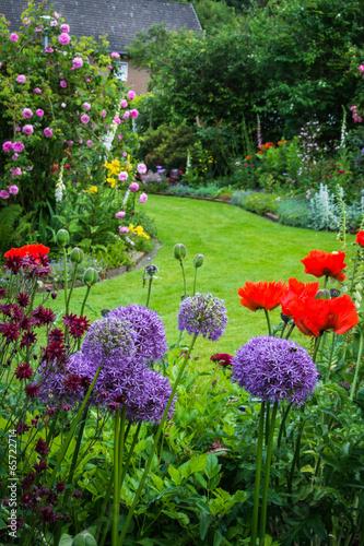 Idyllischer Garten mit Zierlauch und Mohnblumen - 65722714