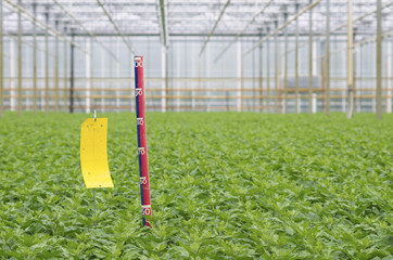 ruler in greenhouse