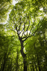 tree in a green forest in summer