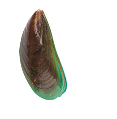 A mussel over white background