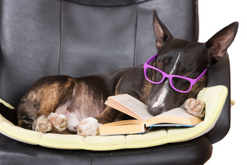 dog in glasses with a book