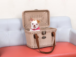 Little dog in the basket