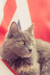Pussy cat sitting on Union Jack