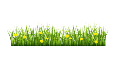 Grass with yellow flowers