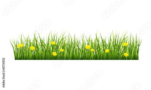 Zdjęcia na płótnie, fototapety, obrazy : Grass with yellow flowers