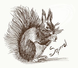 squrrel illustration on background