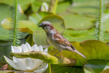 Neugieriger Vogel