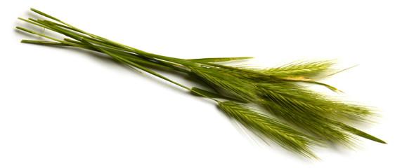 Hordeum murinum  Wall barley Orzo murino Cebadilla ratonera