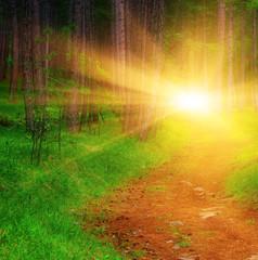 Дорога в летнем лесу