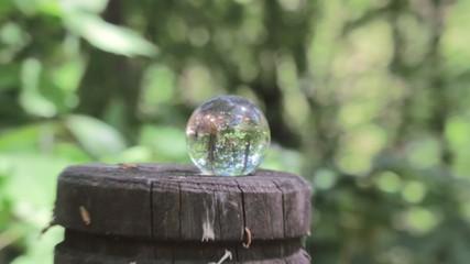 新緑とクリスタル球と虫