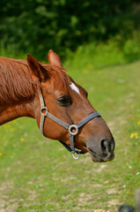 Horse eating Baguette