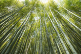 Fototapety bamboo grove, forest of bamboo grove in Arashiyama, Kyoto, Japan