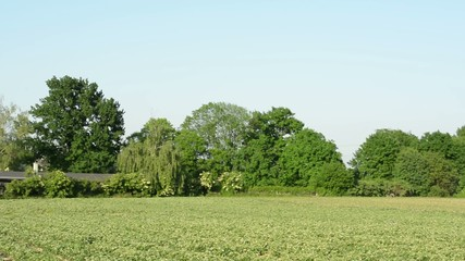 panorama field of crops - trees in background