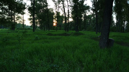 summer forest landscape at sunset - slider dolly shot