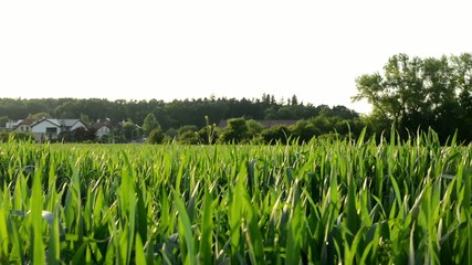 panorama of grass with trees and houses in the background
