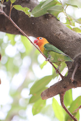 parakeet or parrot on tree branch.