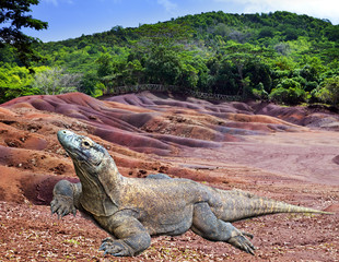 Large monitor lizard on multi color sand..