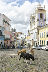 Stray Dogs in Pelourinho Salvador Brazil