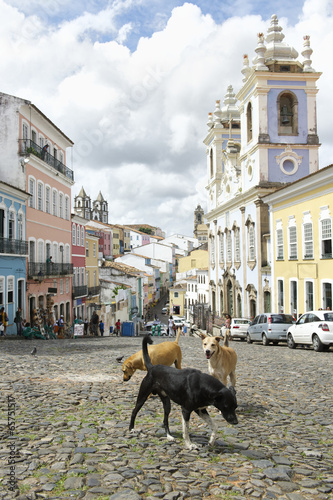 Stray Dogs in Pelourinho Salvador Brazil плакат