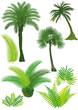 Palmen und Farn