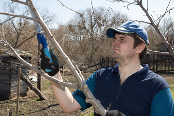 Pruning of fruit trees