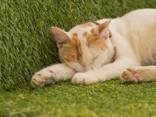 Cute young cat sleeping on green turf