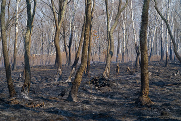 After forest fire 8