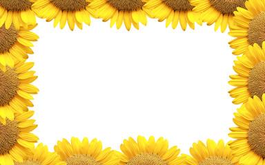 Sunflower of frame isolated on white.