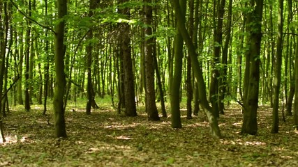panorama of symmetric forest (trees)