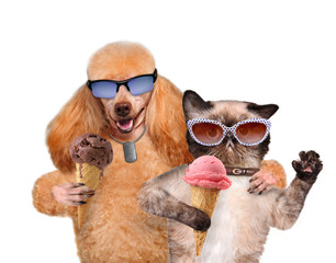 Dog with a cat eat ice cream.