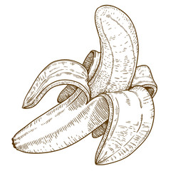 engraving illustration of banana