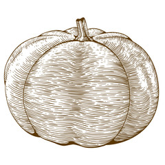 engraving illustration of pumpkin
