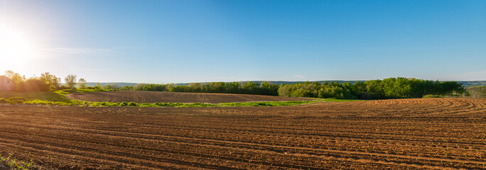 Panorama of agricultural field in springtime
