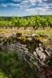 muret viticole