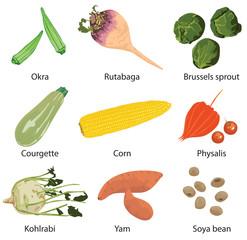 set of 9 vegetables