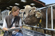 Leinwanddruck Bild - Veterinarian checking on herd's health in barn