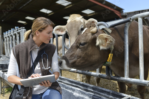 Leinwanddruck Bild Veterinarian checking on herd's health in barn