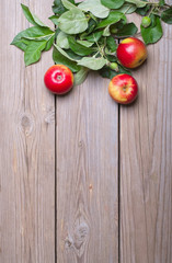 Apples with branches on wooden boards