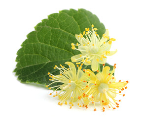 Linden flowers.