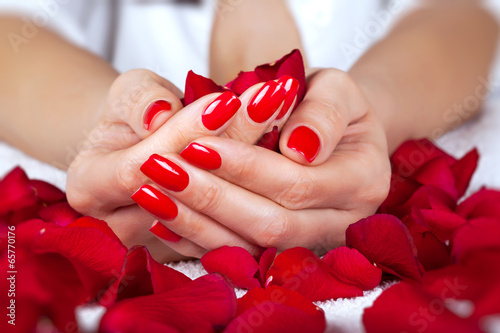 Plakát, Obraz Red manicure on a woman hands with leafs of roses.